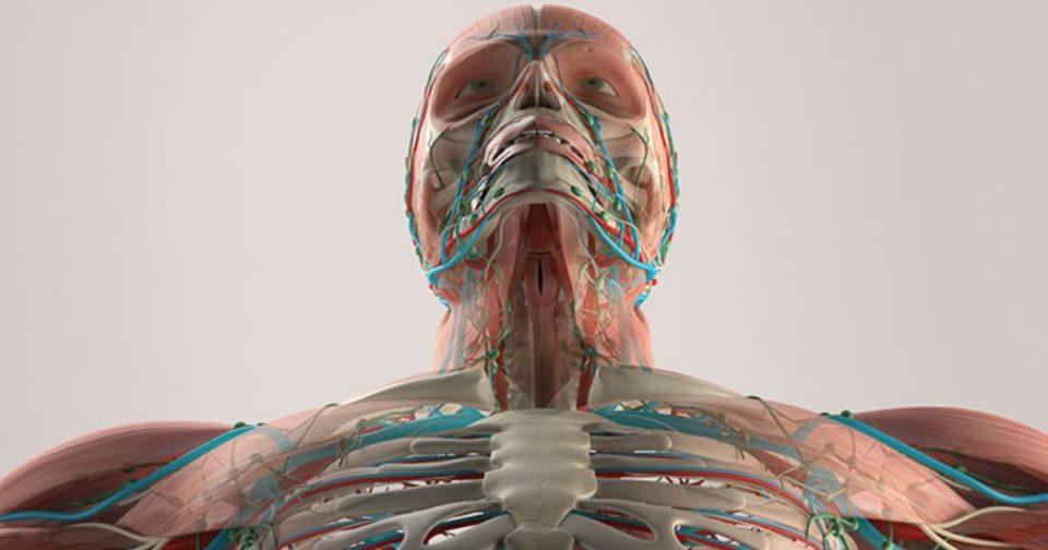 corpo umano vr
